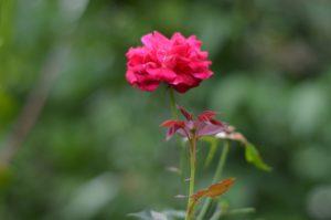 La Floramancie